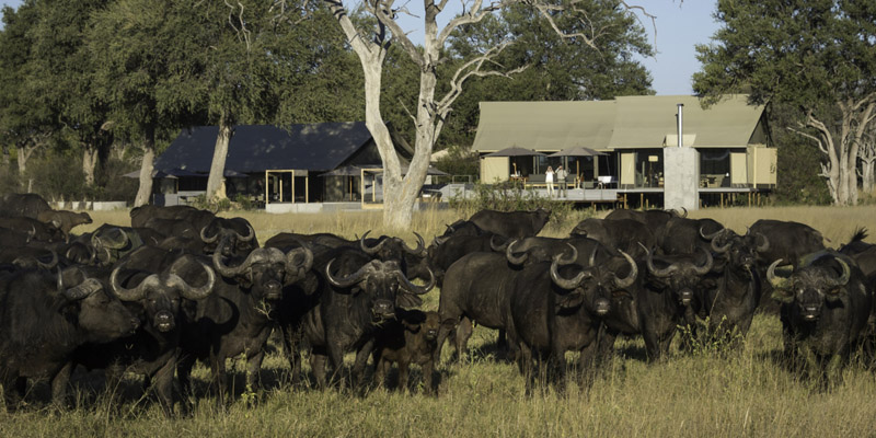 Tasimba Exclusively Yours Linkwasha Camp With Cape Buffalo