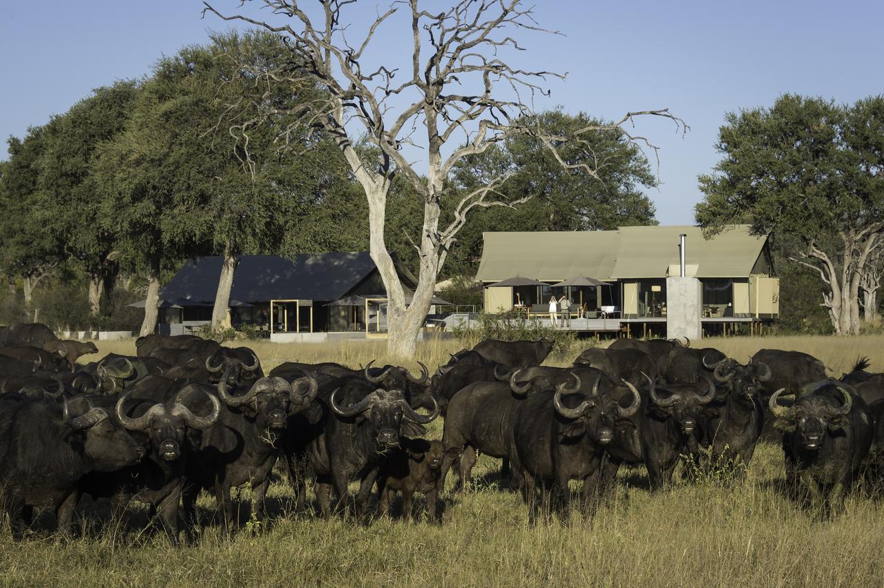 Exclusive Tasimba Linkwasha Camp with cape buffalo