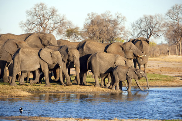 Tasimba Blog For the Love of Elephants