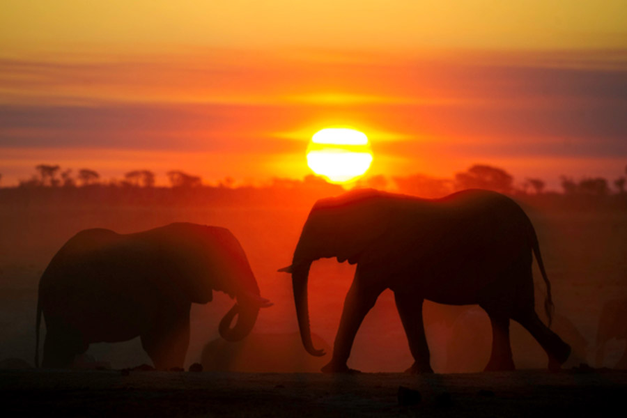 Tasimba - Sunset - Elephant
