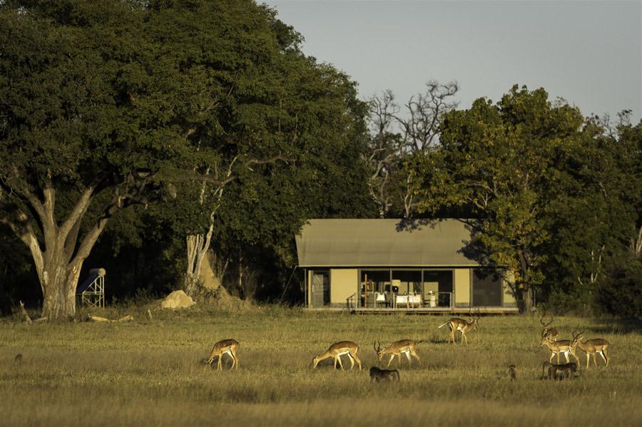 Tasimba - Linkwasha - safari
