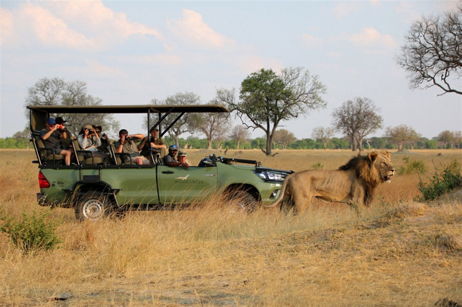 Tasimba Safari Jeep Lion