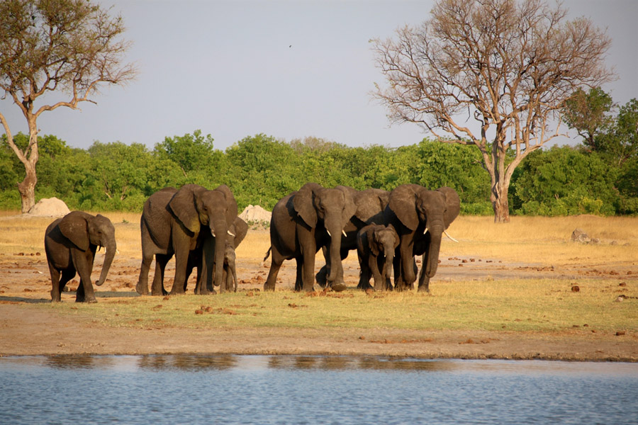 Tasimba Safari Elephants Linkwasha Waterhole