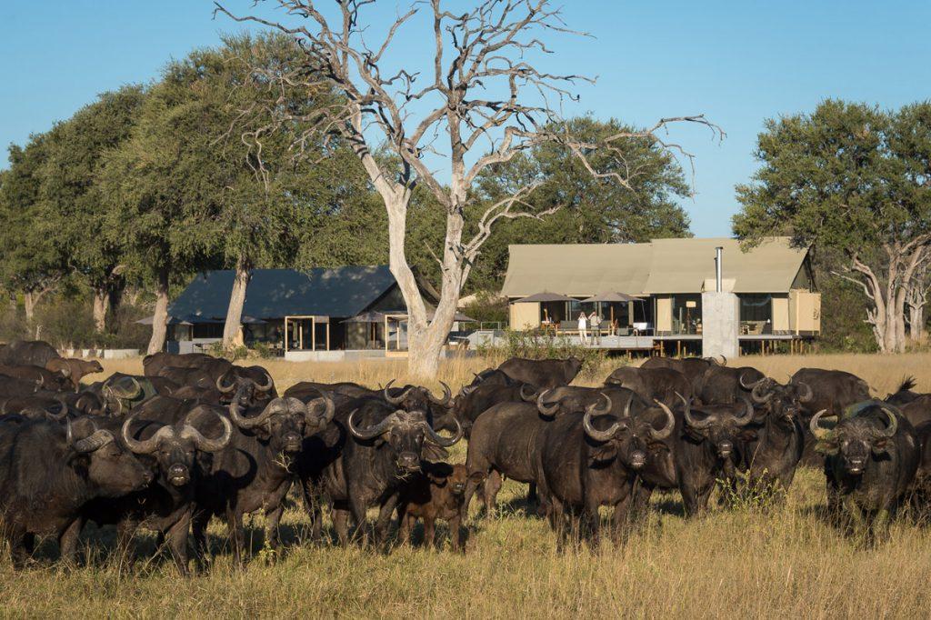 Exclusive Tasimba Safari, Linkwasha Camp