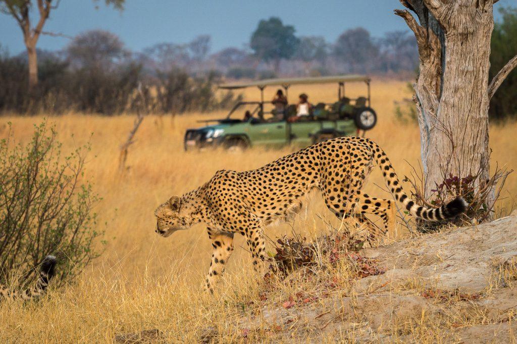 Exclusive Tasimba Safari, leopard