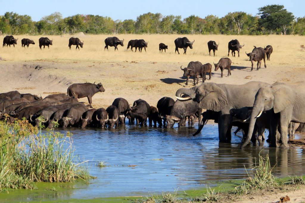 Tasimba Safari, Linkwasha waterhole, elephant and cape buffalo, 7 Days to Change Your Life