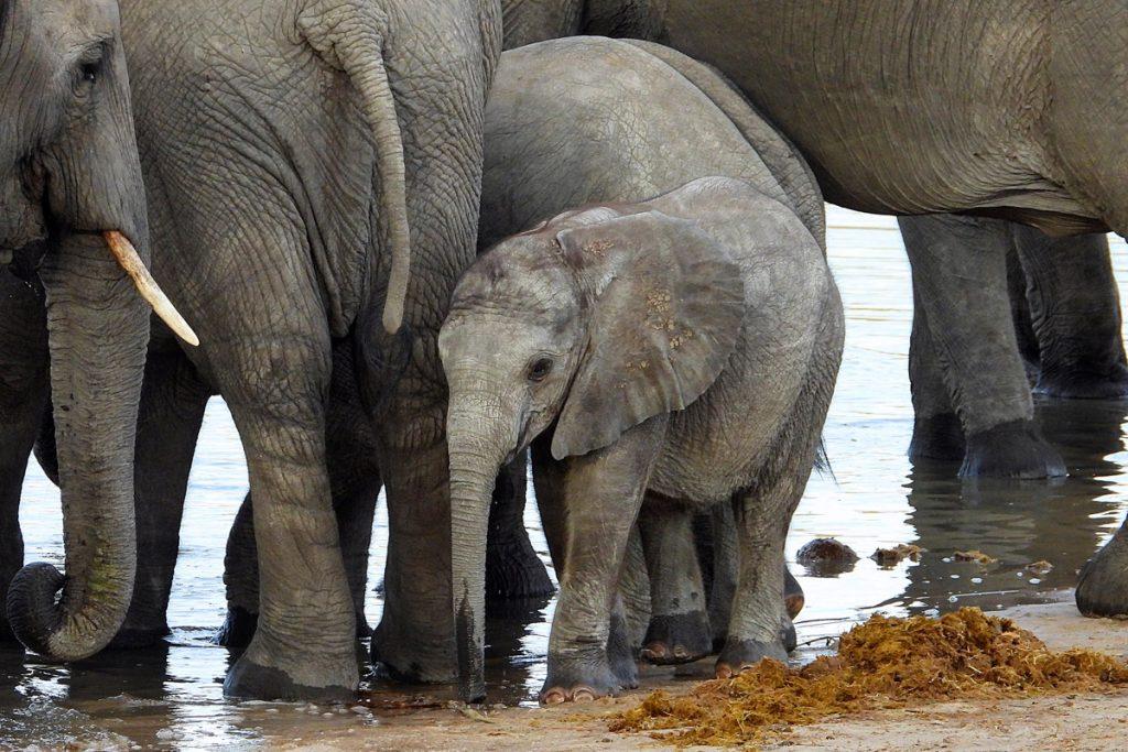 Tasimba - Out of Africa - Baby Elephant